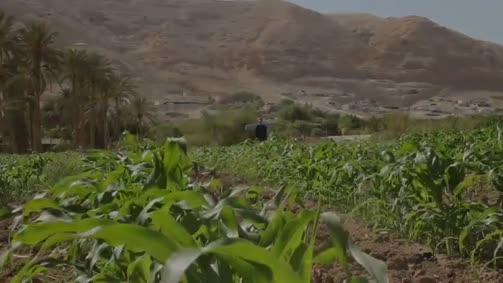حكاية فلسطين