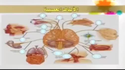 الجهاز العصبي الطرفي